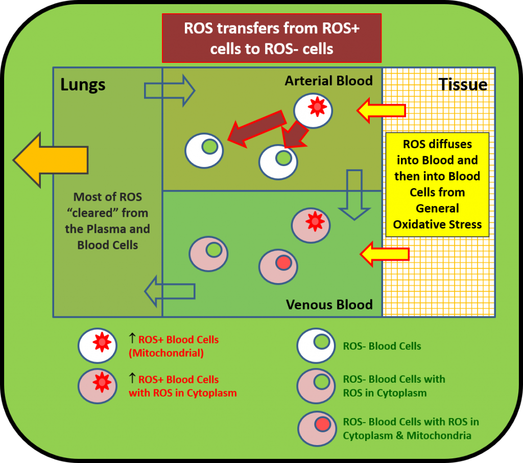 BLOS is primary source of Oxidative Stress