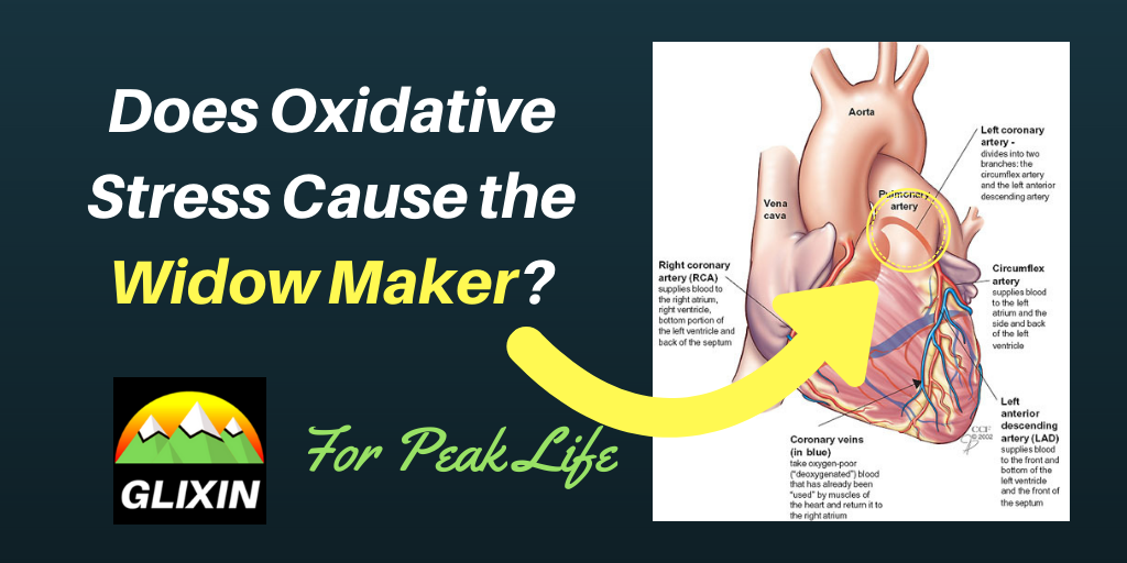 Does Oxidative Stress Cause the Widow Maker?