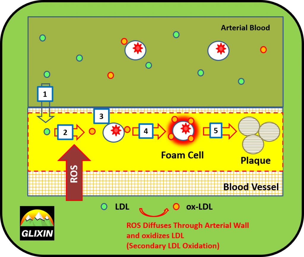 Secondary LDL Oxidation